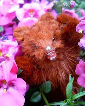 熊と花.JPG